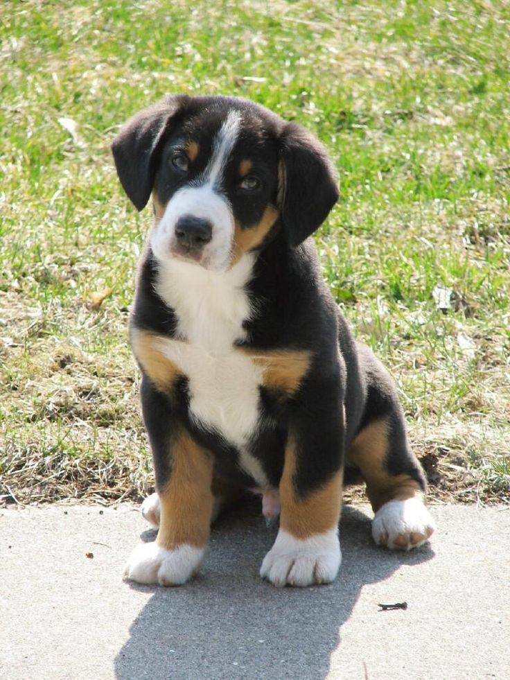 Only one more year till chuck lets me bring one of these little guys home!