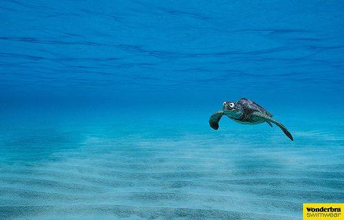Wonderbra Swimwear ad by lef72, via Flickr