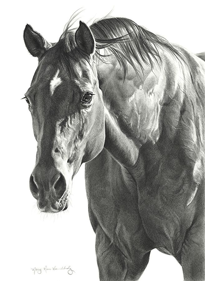Sheena by Mary Ross Buchholz Graphite & Charcoal ~ 17 x 12.5