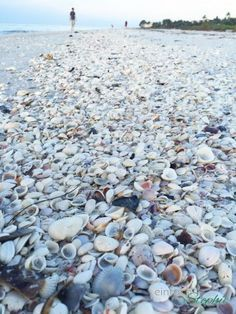 Florida mit Kindern: Sanibel Island. Muschelparadies Florida und Schwimmen mit Delfinen in freier Natur: http://einfachstephie.de/2016/04/05/familienurlaub-florida-mit-kindern-erleben/ #florida #familienurlaub #familiytrip #roadtripflorida #usa #urlaubusa #urlaubmitkindern #floridakeys: