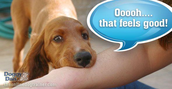 how to teach a puppy no biting