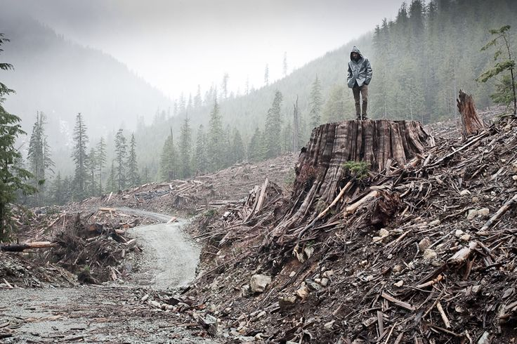 ~ TJ Watt - old growth clear cut on southern Vancouver Island