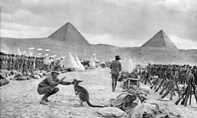 Australian 9th and 10th battalions in Egypt with their regimental mascot, WW1 December 1914