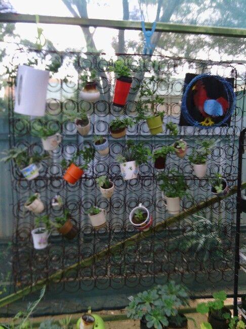 Spring cup of tea vertical garden