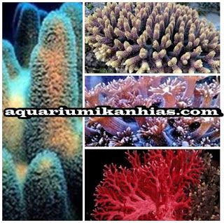 Jual Perlengkapan Aquarium Air Tawar | Akuarium Ikan Hias