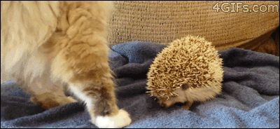 Ouch, that pillow is prickly-needs fabric softener!