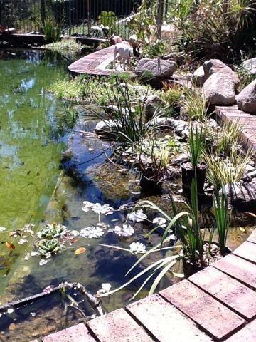 Beryl's natural swim pond blog