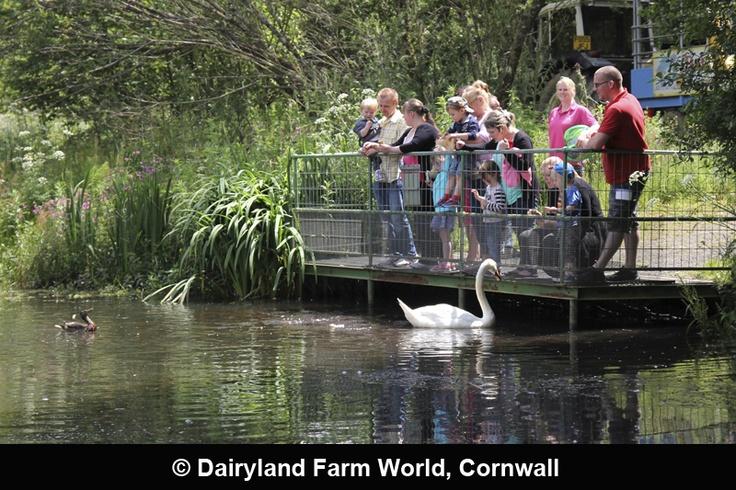 Dairyland Farm World, Cornwall
