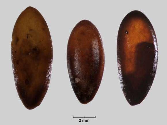Università Cagliari: sardi primi a coltivare melone