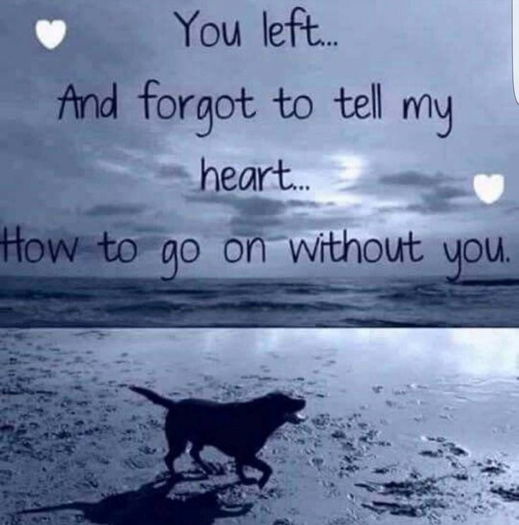 Loss Of Pet Quotes For Dogs: 25+ Best Ideas About Pet Memorials On Pinterest