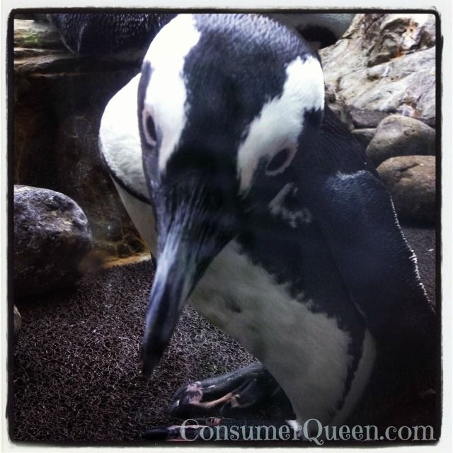 Ripley's Aquarium #Gatlinburg #Tennessee