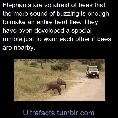 Elephant facts! :D
