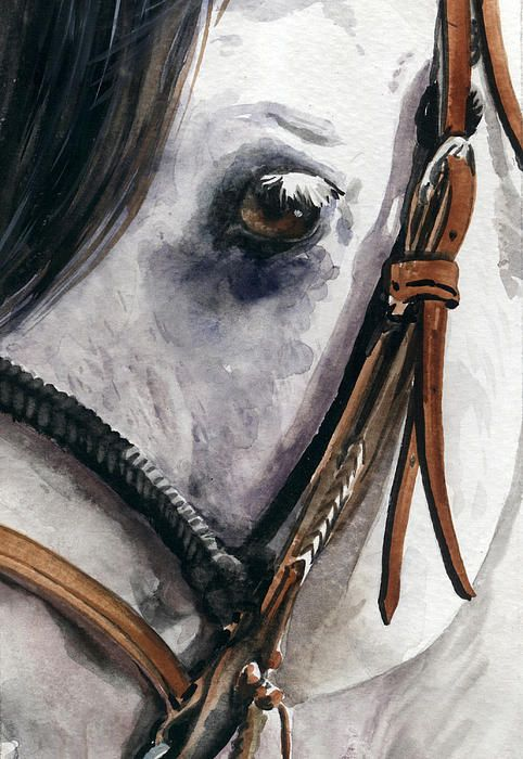 Horse Head Painting  - Horse Head Fine Art Print  by Nadi Spencer