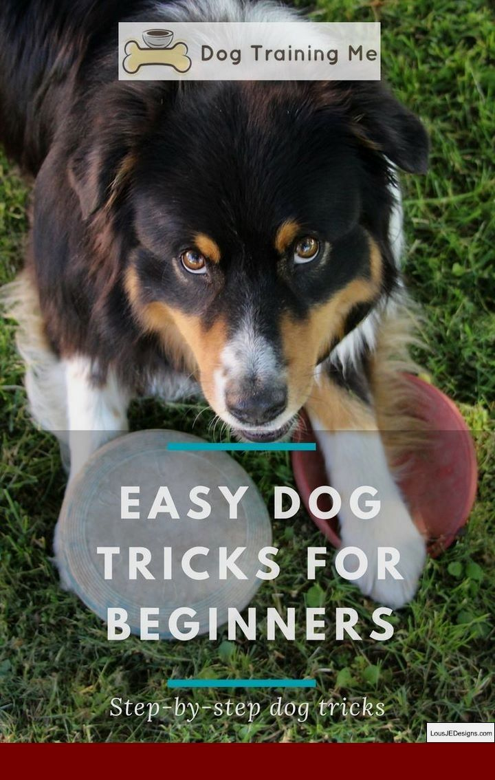 Tips For House Training Your Dog And Pics Of Best Way To Train A