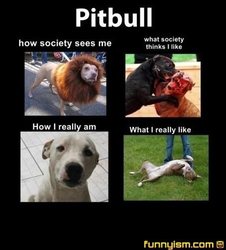 Why does everyone hate pitbulls?