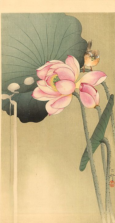 "Songbird and Lotus - Ohara Koson (1877-1945 ) was a Japanese painter and printmaker of the late 19th and early 20th centuries, part of the shin-hanga (""new prints"") movement."