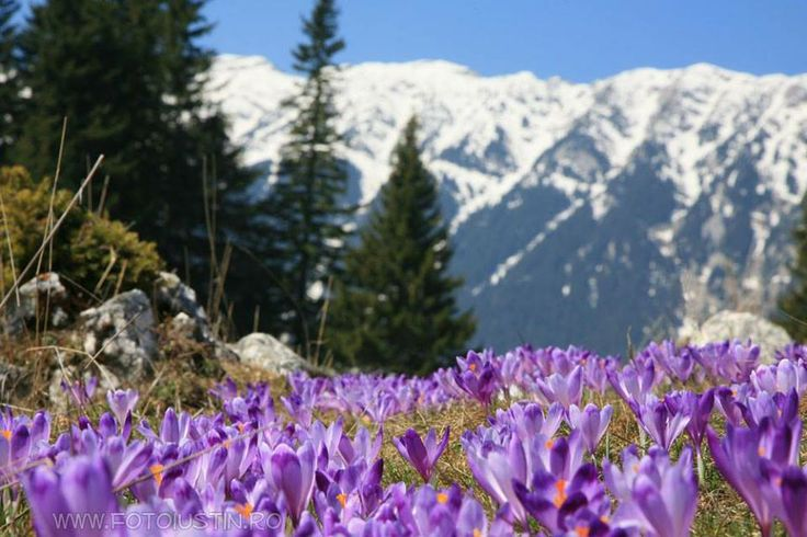Monte Piatra Craiului, Romania