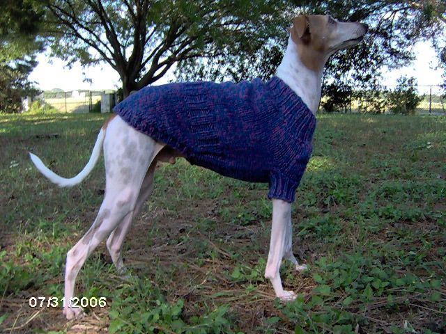 1000+ images about Greyhound sweaters on Pinterest Coats, Crochet dog sweat...