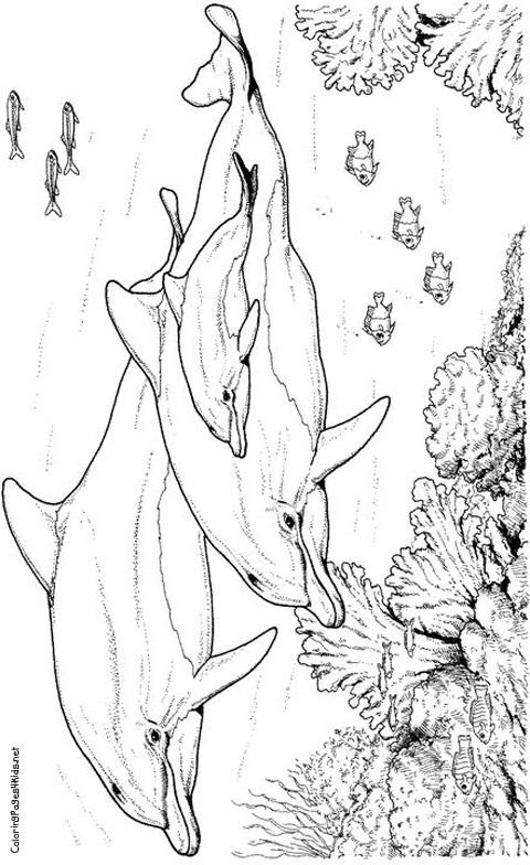 hard dolphin coloring pages - photo#39