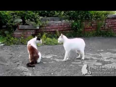 LOVELING   BABY    AND   FUNNY    CAT   2