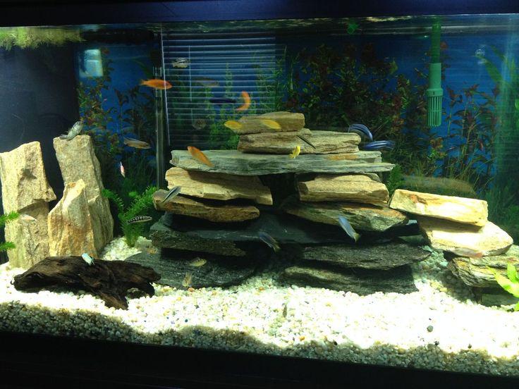 modele aquarium amazing ides dco pour votre aquarium laissezvous inspireru with modele aquarium. Black Bedroom Furniture Sets. Home Design Ideas