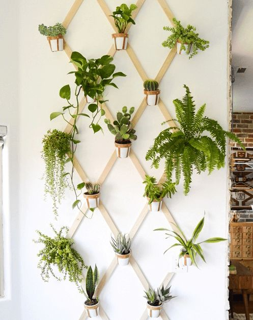 Best 25 wall planters ideas on pinterest herb wall for Ways to hang plants inside