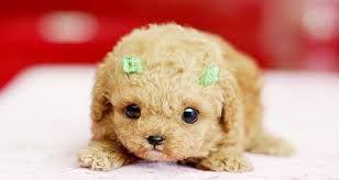 es una perra hermosa