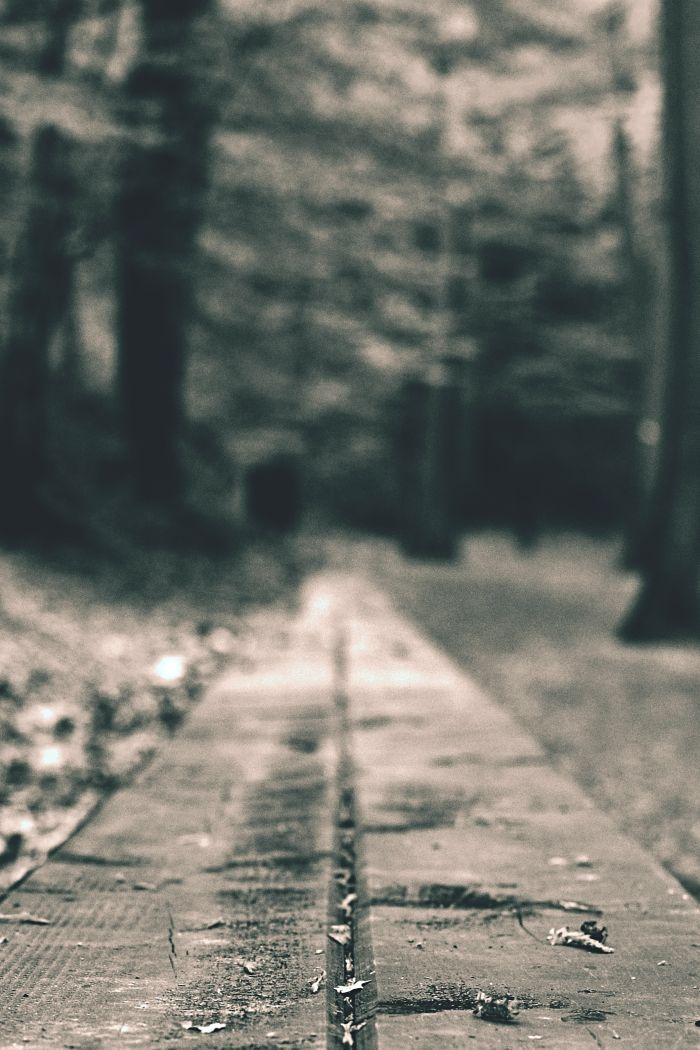 Walking in the forest. Black and white photography and street photography.