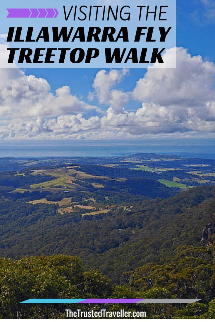 Visiting the Illawarra Fly Treetop Walk - The Trusted Traveller