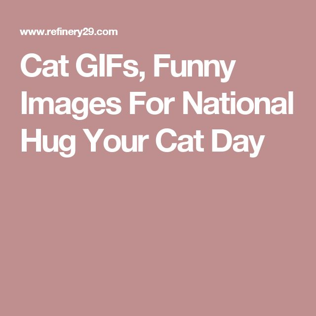 Cat GIFs, Funny Images For National Hug Your Cat Day