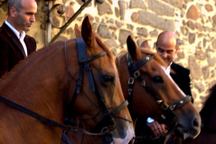 Cavalieri dell'Ardia, primera banderas...Sedilo 2015  photo by loybillyrock