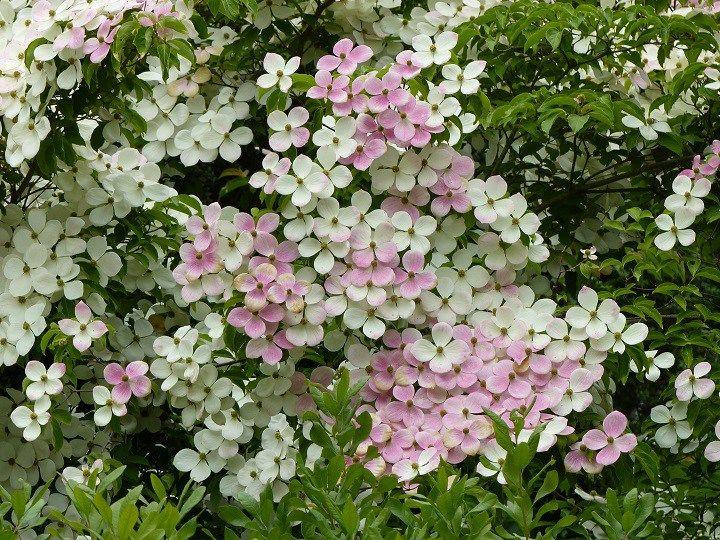 les 203 meilleures images du tableau projet jardin plantes sur pinterest arbustes plantes. Black Bedroom Furniture Sets. Home Design Ideas