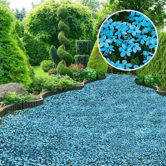 bodendecker blauer stern online kaufen bei ahrens sieberz garten pinterest gardens garden. Black Bedroom Furniture Sets. Home Design Ideas