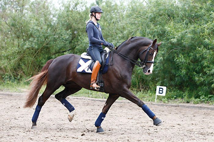 Classic navy + tan boots :) (gorgeous horse too)