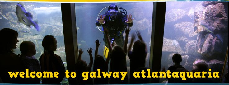 Galway Atlantaquaria : Galway Atlantaquaria Chlobebo and Gracicles Adventures Pinterest
