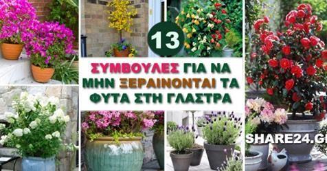 Μωσαϊκό: Για να Μην Ξεραίνονται τα Φυτά στη Γλάστρα!