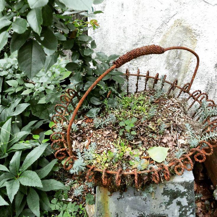 おはようございます、、、、 こーゆーの 大好き あちこち行くのが好きで 撮りためた画像より、、、、 うちでは ありませんよ〰〰 #ジャンク#junk#ジャンクガーデン #junkgarden#錆び#サビサビ #ブロカント#brocante #古雑貨#古道具 #ナチュラルガーデン#心に残る  あちこち 行きたいとこだらけ〰(#^.^#)