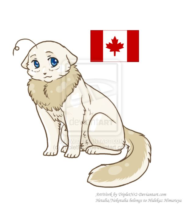List of Synonyms and Antonyms of the Word: hetalia canada cat