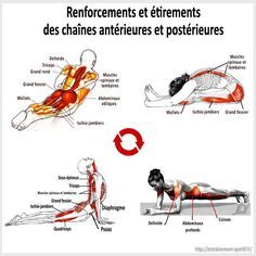 Renforcements et étirements des muscles du dos et du ventre                                                                                                                                                                                 Plus