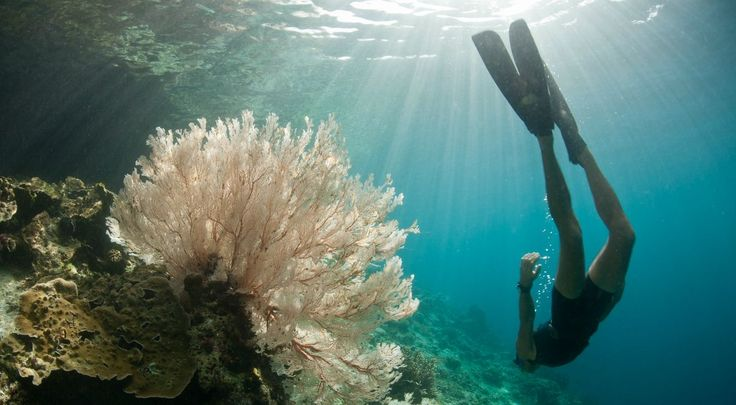 Do the Chemicals in Your Sunscreen Damage Fragile Coral Reefs? | Some of the sunscreen chemicals we warn people to avoid may also endanger coral reefs.