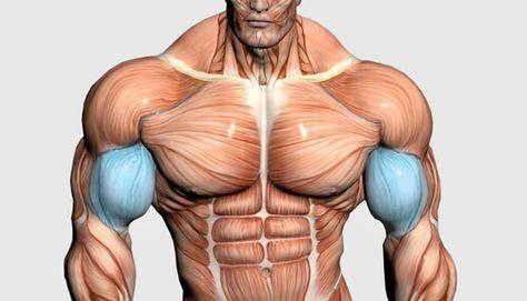 10 week mass building program  muscle building workouts