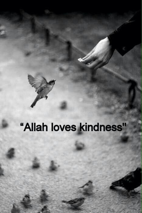 Allah Loves Kindness #2tiata