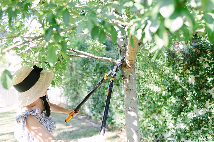 The benefits of pruning are endless! Diana Elizabeth shares a few of her favorite tips on how she keeps her shrubs, trees and bushes in top shape through fall.