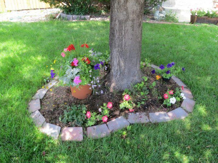 Canteros de flores alrededor de rboles flor - Decoracion de arboles de jardin ...