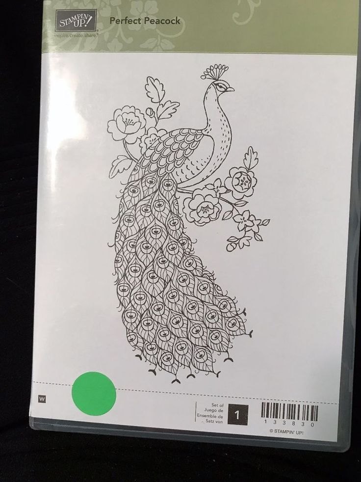 Stampin Up PERFECT PEACOCK wood mount stamp 133830 Retired   #STAMPINUP #Background