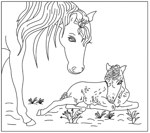100 best lente - kleurplaten images on pinterest   coloring books ... - Baby Horse Coloring Pages Print