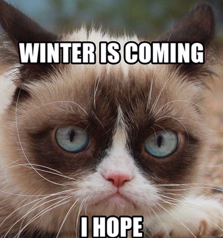 WINTER IS COMING-Grumpy Cat Meme | Cats | Grumpy cat meme ...