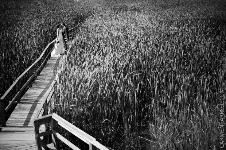 Bridge near in the Marsh at Kortright Centre - very popular for photos