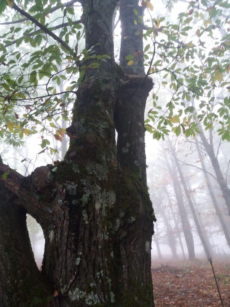Sierra de San Vicente (Toledo) - Entre nieblas y castaños (5)