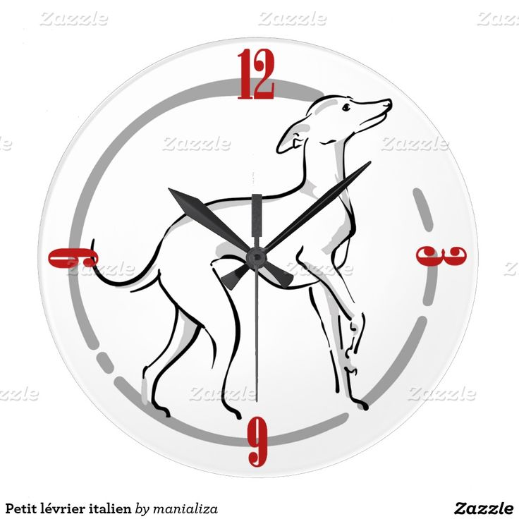 Petit lévrier italien grande horloge ronde